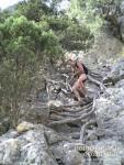 Лестница из корней